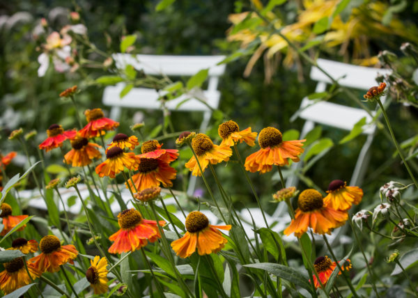 Garten Frankfurt Juli 2016